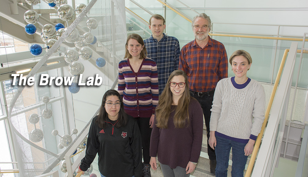 Brow Lab group picture
